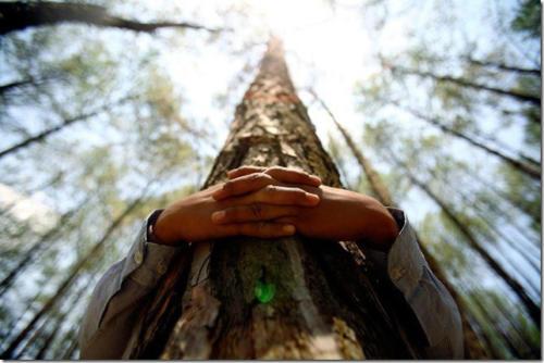 marche-meditative-et-consciente